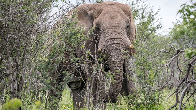 In Namibia - Australian Tourist killed by Elephant