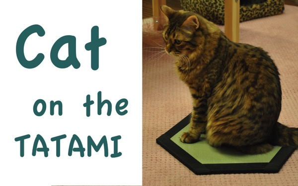 Cat on the tatami