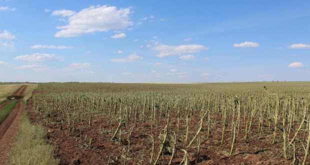 Татар Каргалысы фермерлары зыян күрде