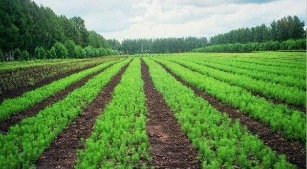 В Татарстане высадят почти 500 тыс. деревьев в память о погибших в годы ВОВ