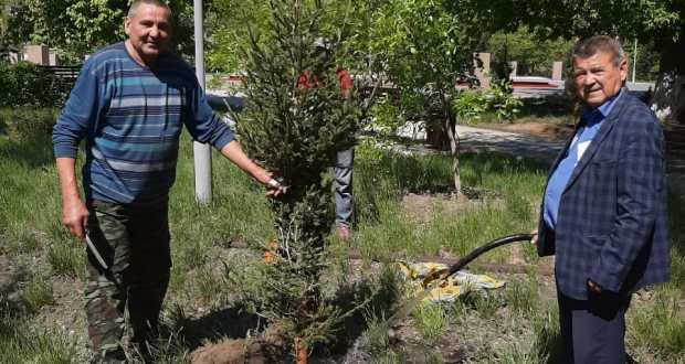 В городе Семей Восточно-Казахстанской области прошла акция по посадке елей