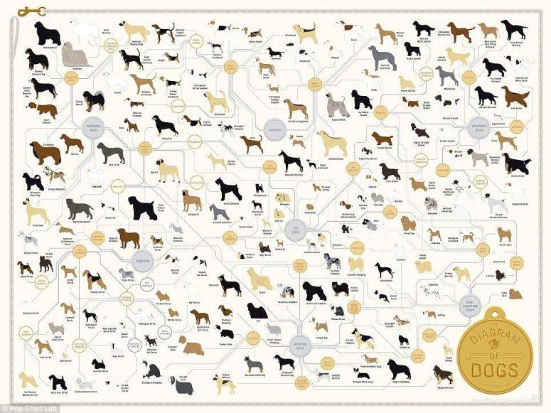 arbol_genealogico_perros