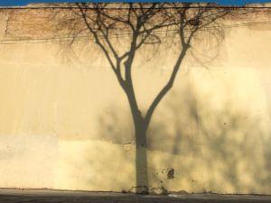 sombra del árbol genealógico