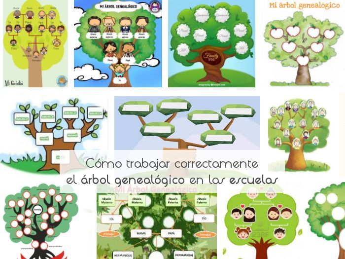 Cómo Trabajar Correctamente El árbol Genealógico En Las Escuelas