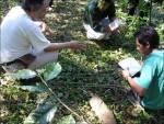 valutazione biodiversità