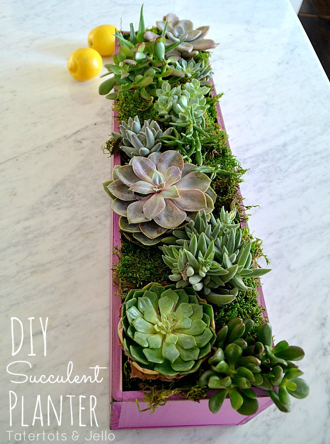 diy spring succulent planter at tatertots and jello