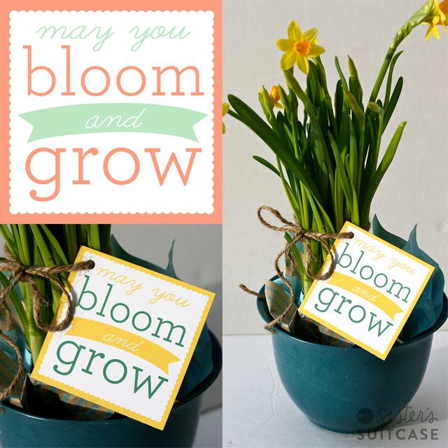 spring-bloom-grow-printable-tag