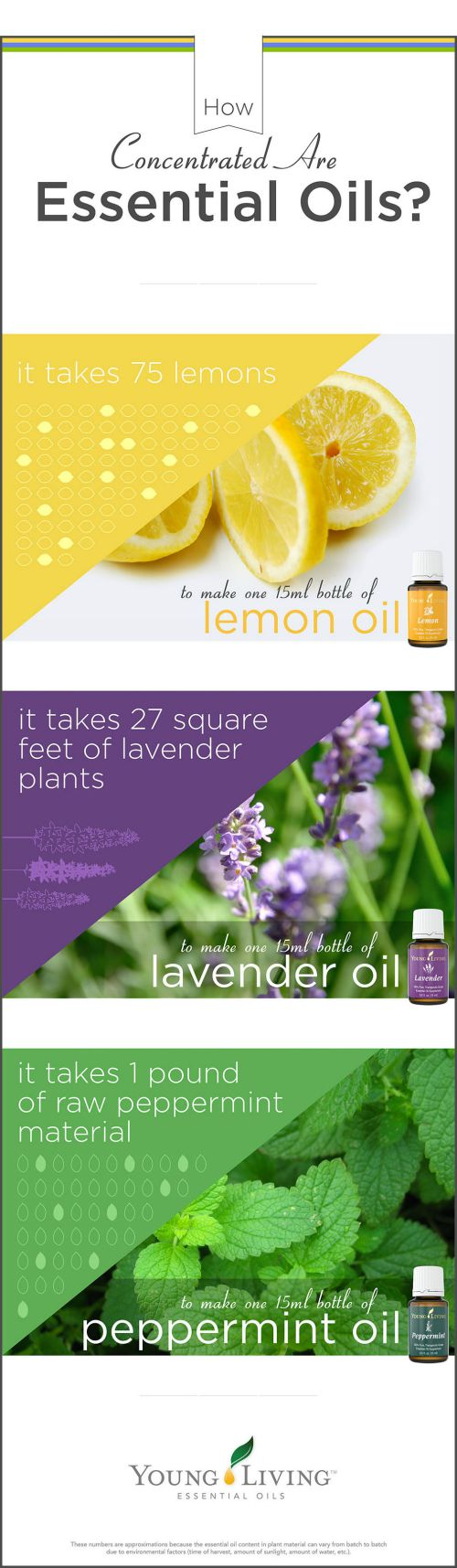 concentrated.essential.oils2