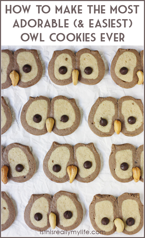 Owl-Cookies-graphic