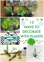 Great Ideas — 15 Ways to Decorate With Plants!