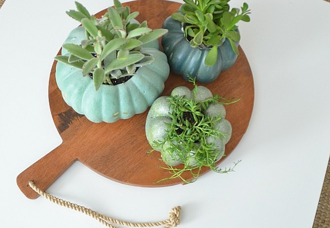 Pumpkin Succulent Planters DIY