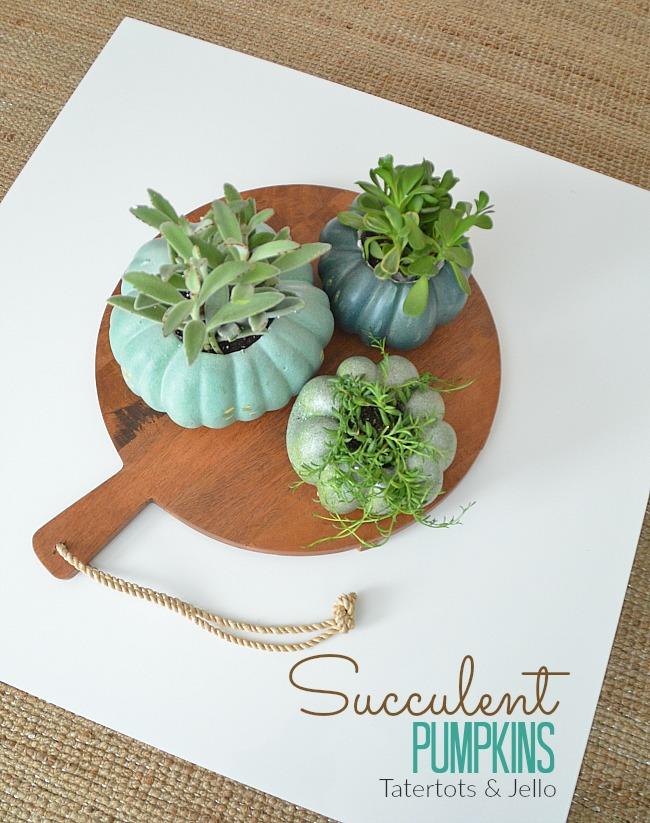 succulent pumpkins for autumn