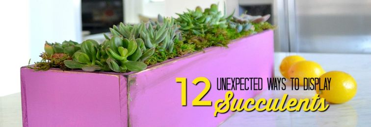 12 ways to display succulents.