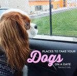"Puppaccino Playdates – Places to Take Your Dog on a ""Date"""