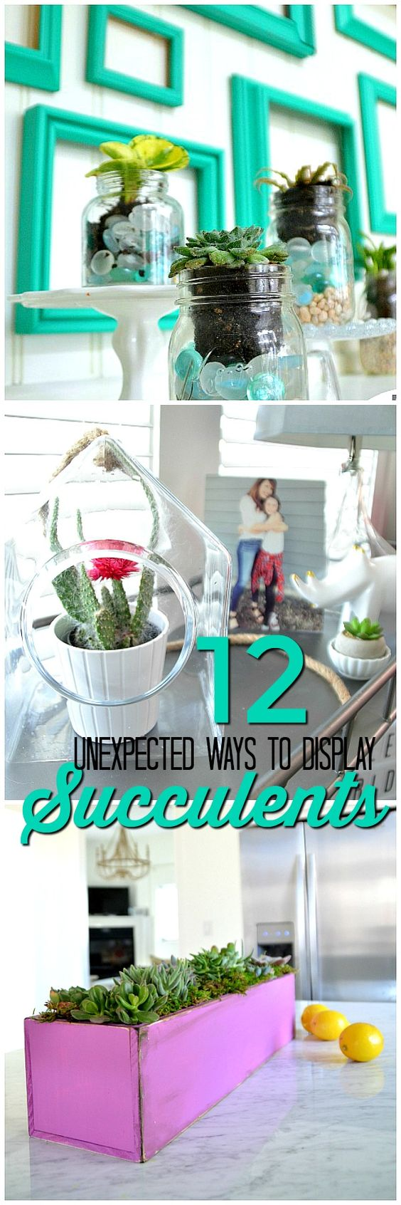 unique ways to display succulents. Succulents are beautiful to display in your home and there are so many ways to display them.