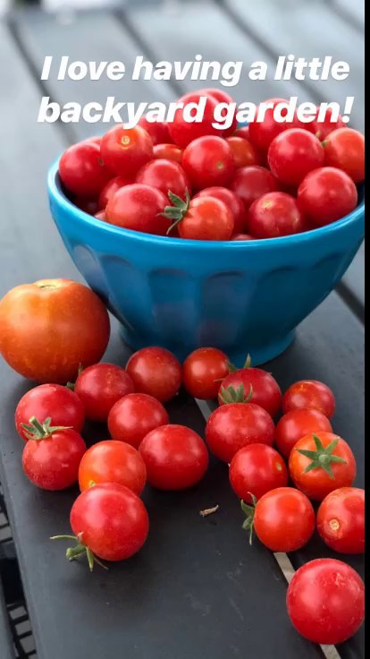 fresh tomatoes for summer salad