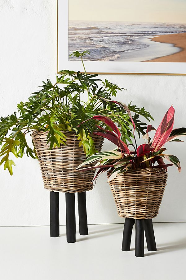 Anthropologie-inspired basket planters with legs. Raise your plants off the ground for better display with these DIY dip-dyed basket planters!