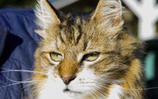 TC-Tates Cat