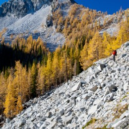 The amount of larch here along the trail to Horse Head Pass was incredible, and such a contrast to the prevalent white granite slopes.