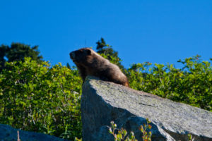 We would see several marmots and pikas here in the steep rock run out's and meadows