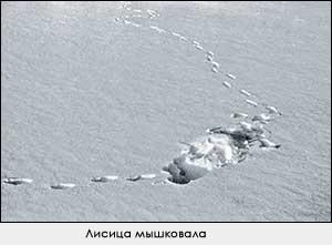 Манки-вабы на лису и волка - Охота в Татарстане