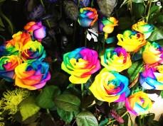 Rose arcobaleno