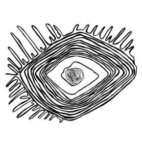 Lines Eye - Curiosity