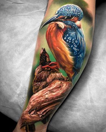 Vibrant Kingfisher
