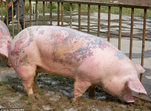 Please Don't Tattoo Live Pigs for Practice