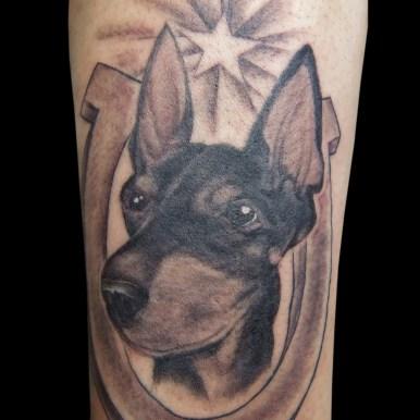 ドーベルマン 犬 doberman dog