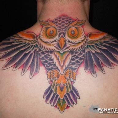 フクロウ owl