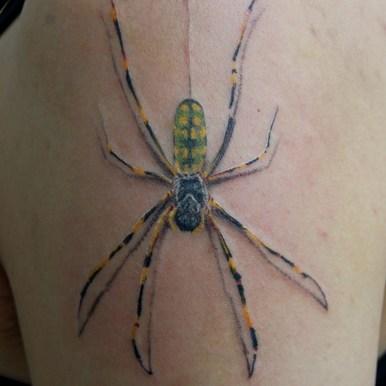クモ spider