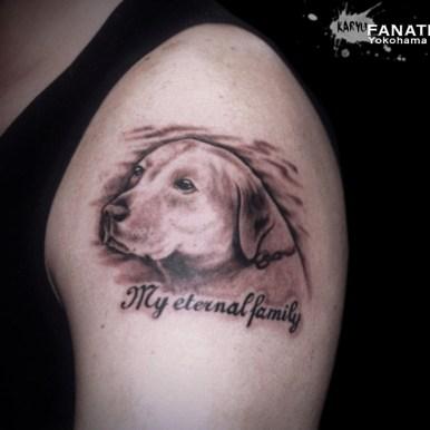 labrador retriever dog ラブラドールレトリバー