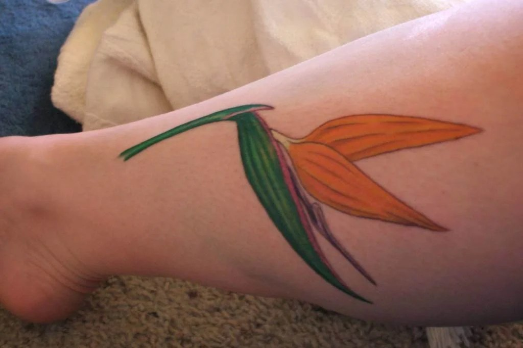 Ideas For Bird Of Paradise Flower Tattoos « Tattoo Ideas And Designs