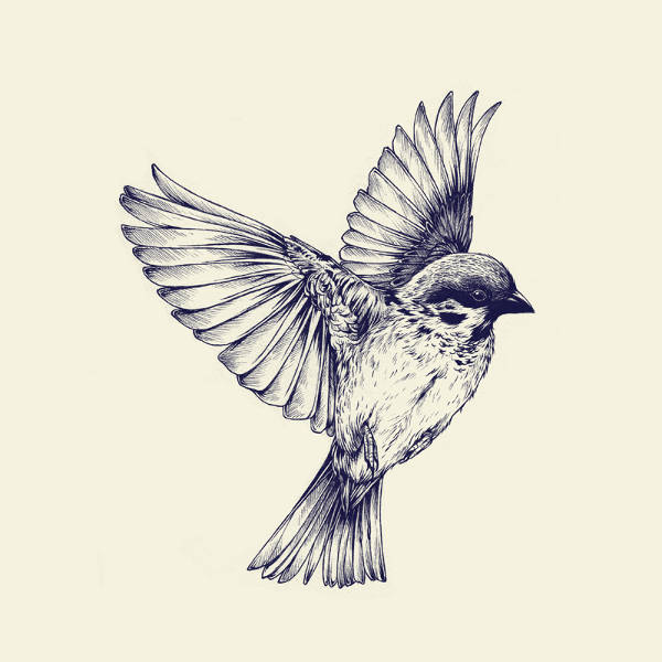 9 Bird Tattoo Designs Psd Vector Eps Download Ideas And Designs