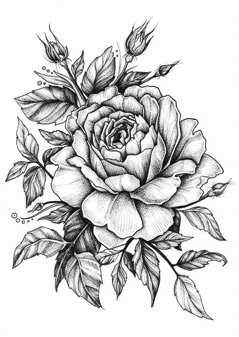 Best 25 Rose Drawings Ideas On Pinterest Roses Drawing Ideas And Designs