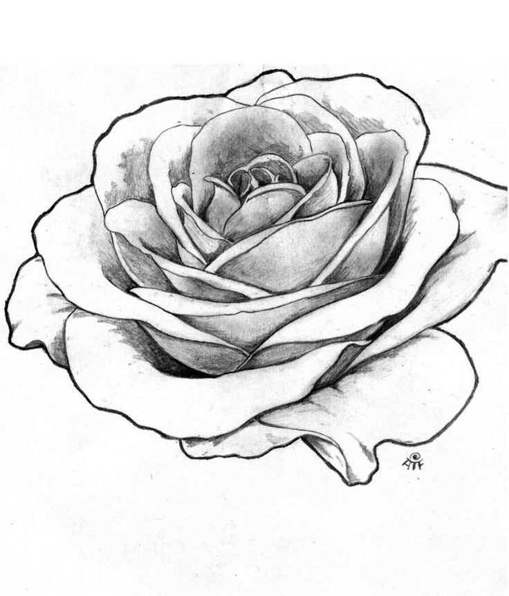 Best 25 Realistic Rose Drawing Ideas On Pinterest Ideas And Designs