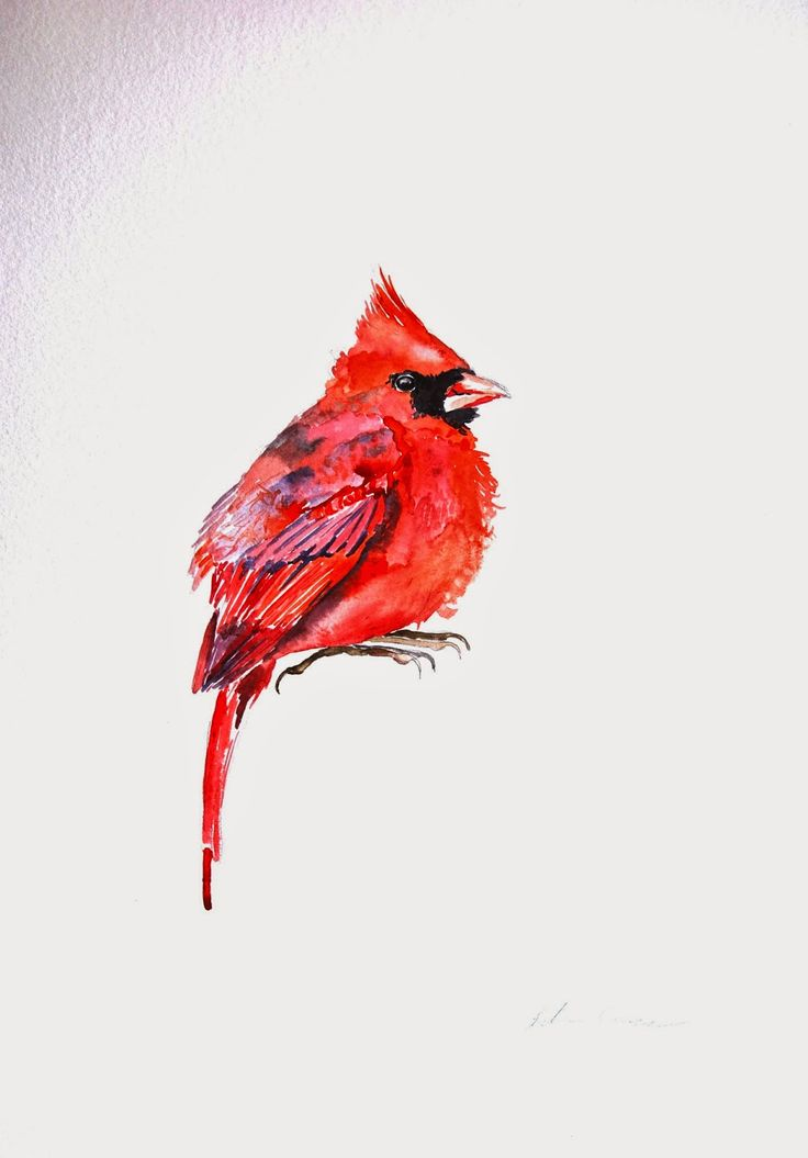 Best 25 Red Cardinal Meaning Ideas On Pinterest Ideas And Designs