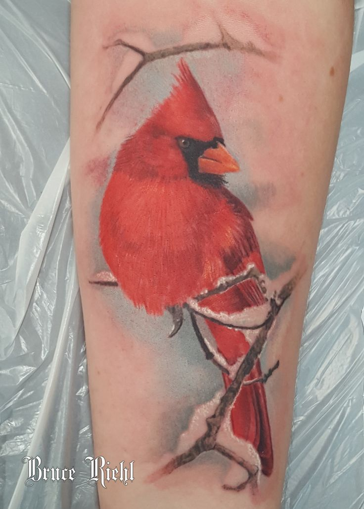 Realistic Color Tattoo Of A Red Cardinal Done By Bruce Ideas And Designs