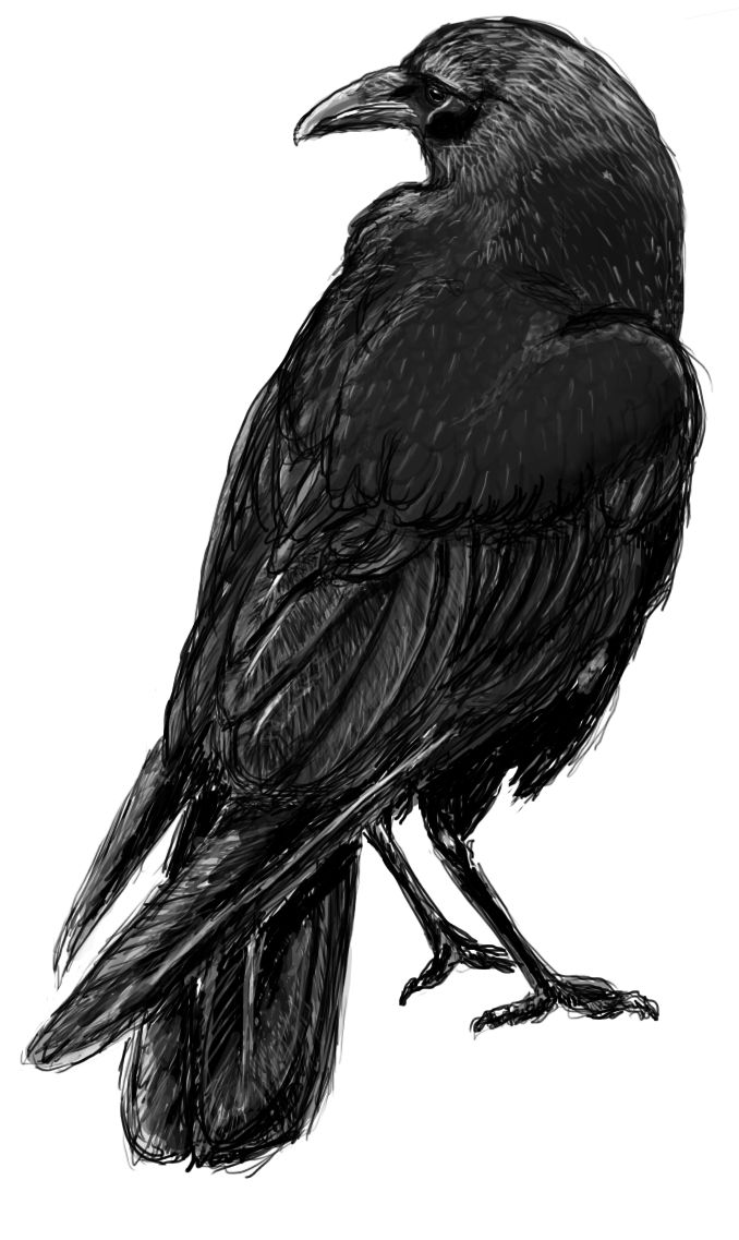 1012 Best Black Birds Ravens Crows Images On Ideas And Designs