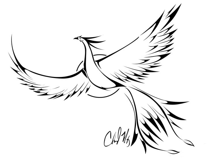 16 Best Bird Outline Tattoo Designs Images On Pinterest Ideas And Designs