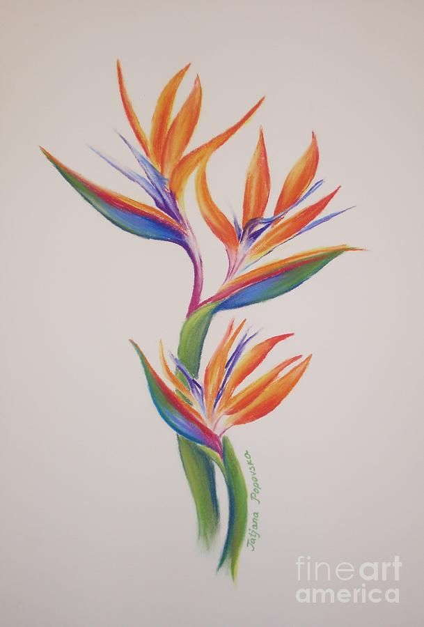 Birds Of Paradise I Acrylics And Oil Paradise Tattoo Ideas And Designs