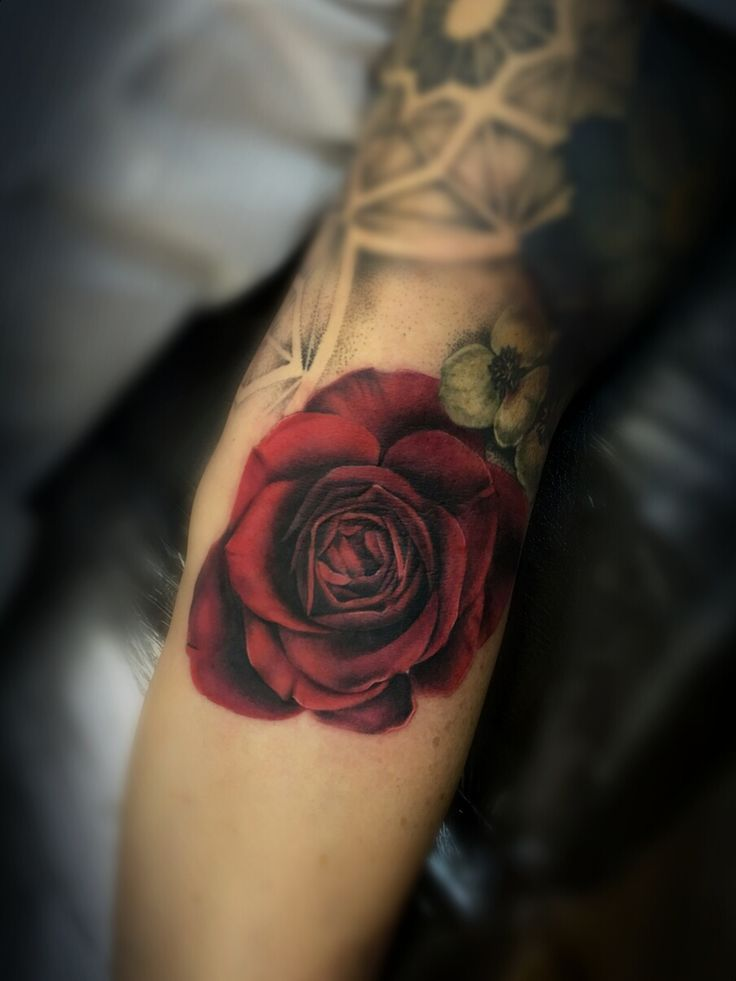 Blood Red Rose By Meghan Ann Of True Blue Professional Ideas And Designs