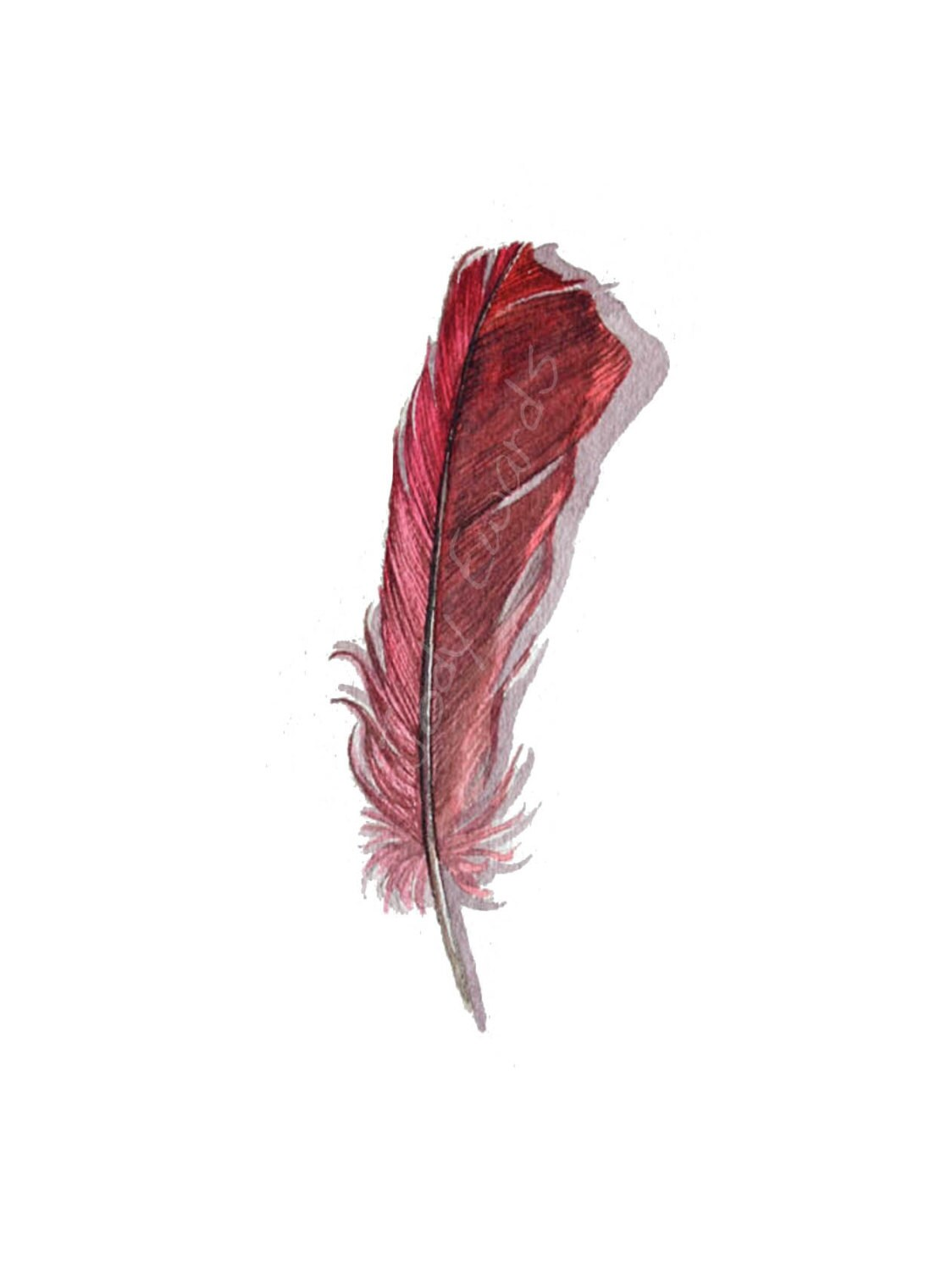 Cardinal Feather Original Watercolor Nightly Study 672 Ideas And Designs
