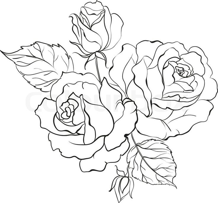 25 Best Ideas About Rose Outline On Pinterest Simple Ideas And Designs