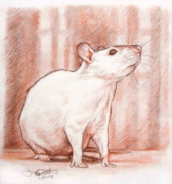 1000 Ideas About Rat Tattoo On Pinterest Mouse Tattoos Ideas And Designs