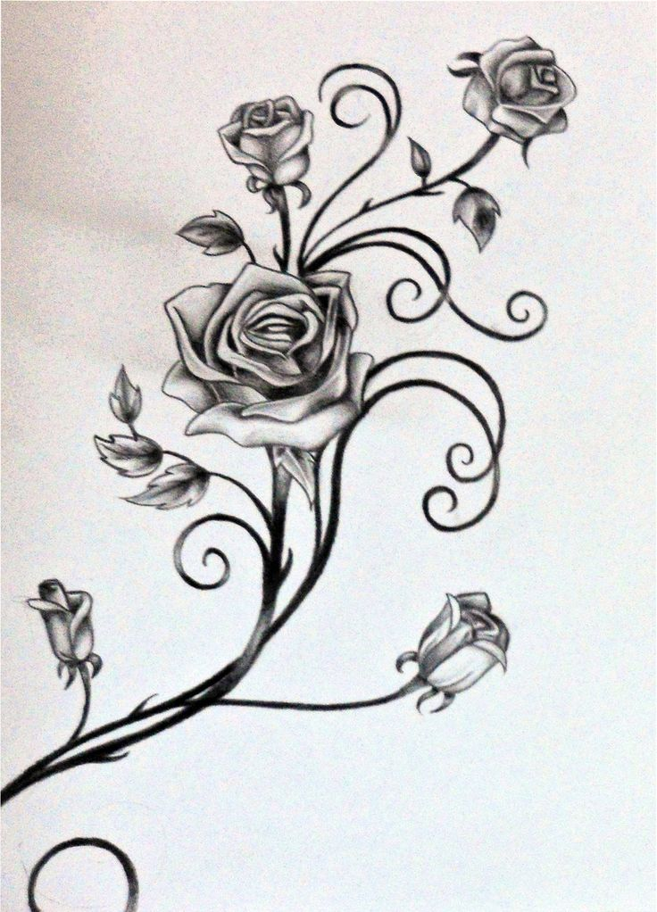 Drawings Of Vines And Leaves Roses And The Vine By Ideas And Designs