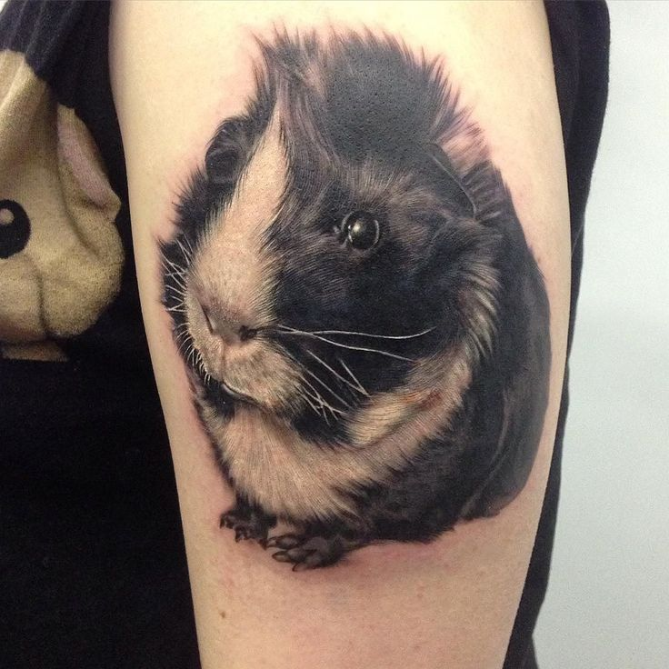 467 Best Images About Guineapigs Cavia On Pinterest Ideas And Designs