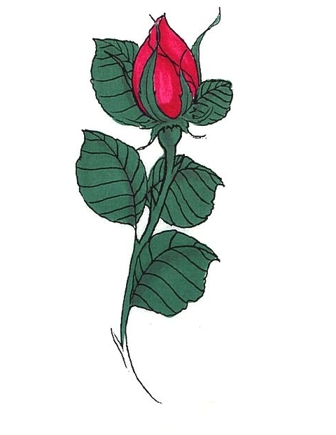 Rose Buds Tattoos Ideas And Designs