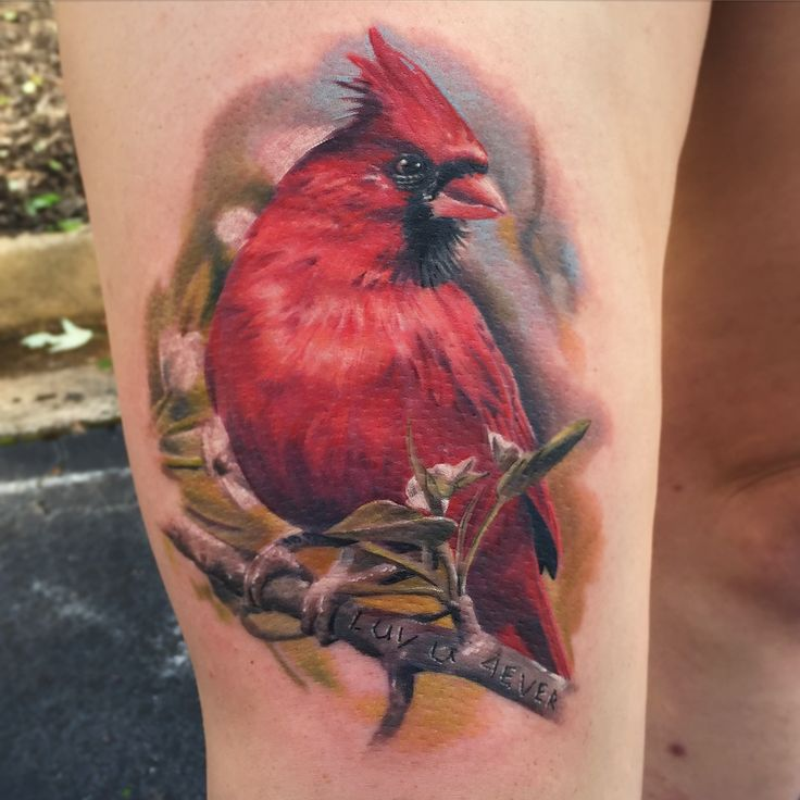 20 Cute Cardinal Tattoos Ideas Ideas And Designs
